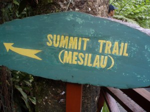 The start of the Mesilau Trail